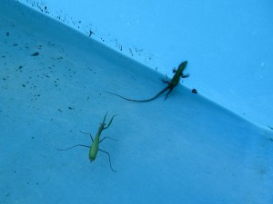 Mantis and lizard