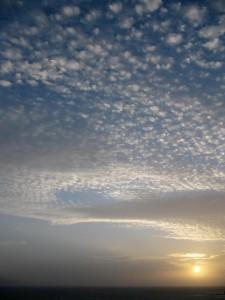 Seedy sky